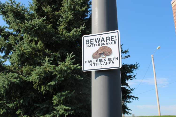 The Rapid City Fire Department and Reptile Gardens are urging the public to be mindful of their surroundings in the late summer and be mindful of their surroundings for rattlesnakes.